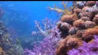 Underwater & Marine life of Oman