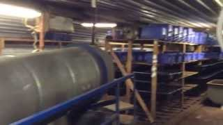 getlinkyoutube.com-Mega Huge European Worm Farm! Yup I Am Excited!