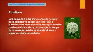 getlinkyoutube.com-Como Tener Una Buena Ereccion Con 3 Hierbas Super Potentes
