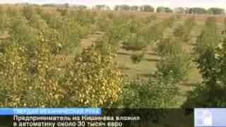 getlinkyoutube.com-Молдавский фермер вложил 30 тысяч евро в машину для сбора урожая ореха