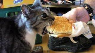 Gatos que platican cuando comen