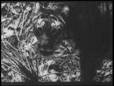 Old India: Maharajah on tigerhunt in 1938