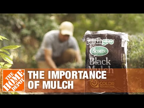 Best Mulch for Your Yard
