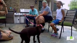 getlinkyoutube.com-Yahtzee is a Winner in Her Forever Home | Pit Bulls and Parolees