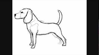 getlinkyoutube.com-Hunde zeichnungen : Beagle - Online Zeichnen Lernen