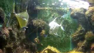 getlinkyoutube.com-ชมพันธ์ุสัตว์น้ำเค็มอ่าวคุ้งกระเบนจังหวัดจันทบุรี Fisheries case rays.