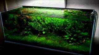 getlinkyoutube.com-300L Nature Aquarium