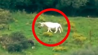 getlinkyoutube.com-5 Unicorns Caught on Camera & Spotted In Real Life!