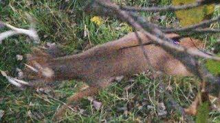 getlinkyoutube.com-Monster Buck spear kill!!!