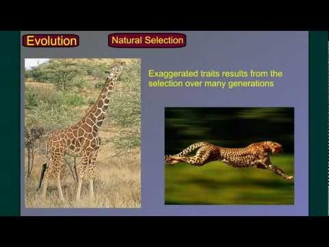 Evolution Part 2A: Natural Selection-Evolution of Evolution