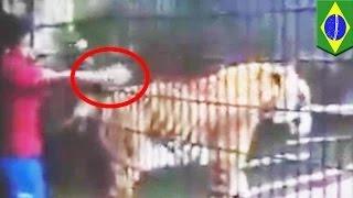getlinkyoutube.com-نمر يلتهم يد صبي في حديقة حيوانات في البرازيل