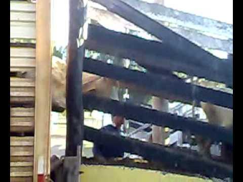 Josué da Costa Marques.... caminhão descarregando boi