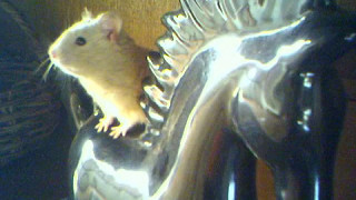 getlinkyoutube.com-Labirinto p/ Hamster