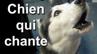 getlinkyoutube.com-LE CHIEN QUI CHANTE - PAROLE DE CHIEN