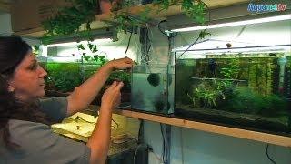 getlinkyoutube.com-Fisch- und Garnelenzucht statt Wohnzimmer bei Ines aus Oberbayern