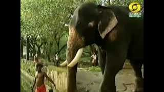getlinkyoutube.com-Kannante Aana Visheshangal