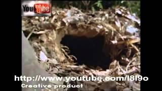 getlinkyoutube.com-أخطر أنواع الثعابين في العالم ملك الكوبرا الجزء الأول
