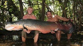 getlinkyoutube.com-Giant Arapaima in Amazon River Canda - FISH MONSTER HUNTING