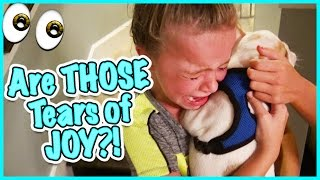 getlinkyoutube.com-🙃 DO WE GET A FRENCHIE? NO CRYING ALLOWED! 🙃SMELLYBELLY TV VLOGS