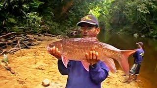 getlinkyoutube.com-Fishing for Malaysian Mahseer at Pahang National Park