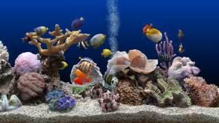 getlinkyoutube.com-★ Marine Aquarium ★ 2K Screensaver ★ Blue Ocean ★ WQHD 60fps ★