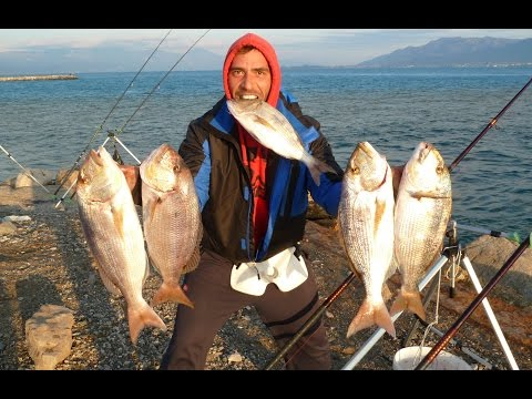 GREAT FISHING FOR SNAPPERS HEAVY CASTING.ΨΑΡΕΜΑ ΣΥΝΑΓΡΙΔΑΣ ΑΠΟ ΤΗΝ ΑΚΤΗ.