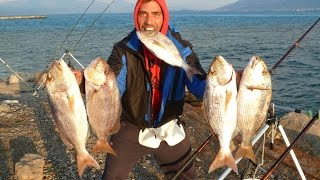 getlinkyoutube.com-GREAT FISHING FOR SNAPPERS HEAVY CASTING.ΨΑΡΕΜΑ ΣΥΝΑΓΡΙΔΑΣ ΑΠΟ ΤΗΝ ΑΚΤΗ.