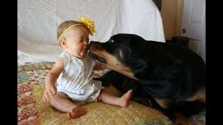 getlinkyoutube.com-Top 10 Best Of Cute RottWeiler And Babies Playing Videos Compilation - Funny Dog And Baby Videos
