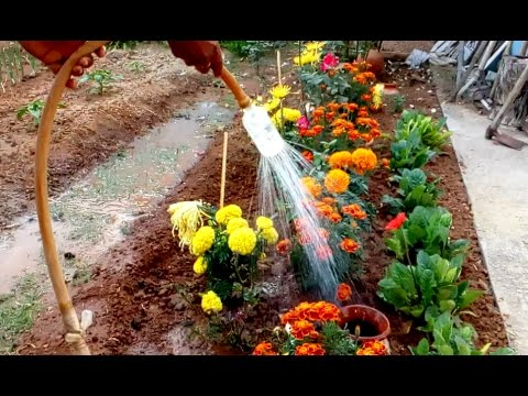 Watering small plant efficient way