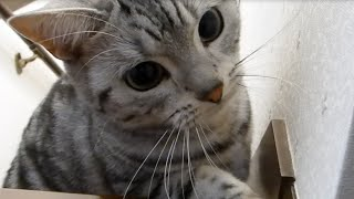 """getlinkyoutube.com-""""わっ""""と驚かすのが楽しくてクセになる猫~母ちゃんが悲鳴を上げると嬉しい! -Enjoy Playing Hide and Seek with cat"""