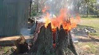 Tree Stump Removal with Leaf Blower