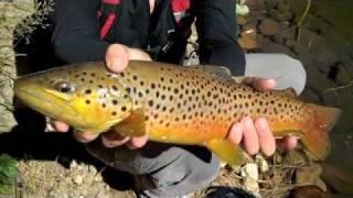 getlinkyoutube.com-Off the Map Wilderness Fishing, AZ Big Brown Trout