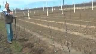 getlinkyoutube.com-Μέρος Β' - Ν. Λυγερός - Ενσωμάτωση ζεόλιθου σε μηλιές. Καστοριά, Φλεβάρης 2014