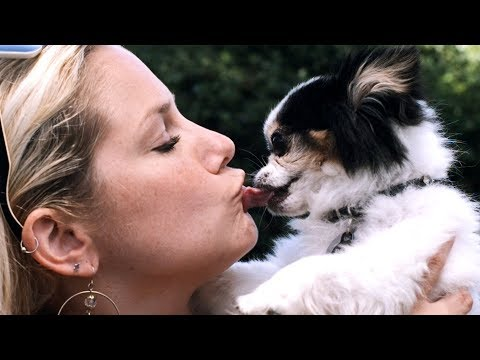 I KISSED A DOG: A Youtube Mash-up Video (Katy Perry Parody)