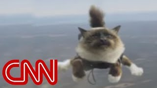 flushyoutube.com-Skydiving cats cause uproar