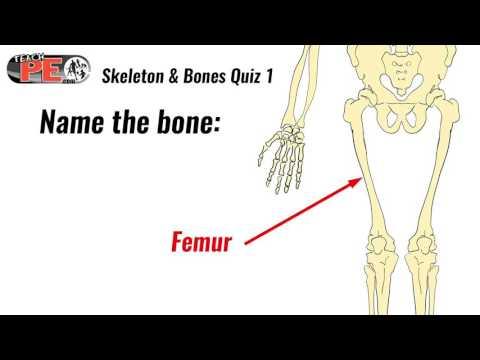 Skeleton and bones quiz 1 (test)