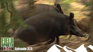 getlinkyoutube.com-Fieldsports Britain - Hunting Boar with Hounds