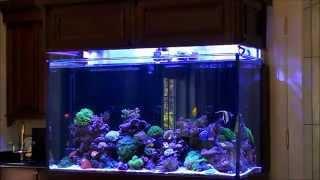 getlinkyoutube.com-Don's High-Tech Custom Reef Tank
