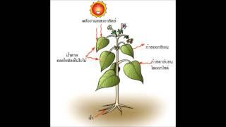 getlinkyoutube.com-การสังเคราะห์ด้วยแสงของพืช