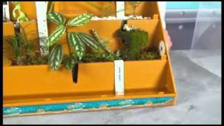 getlinkyoutube.com-WILD! Science™ Eco Dome Planet Management