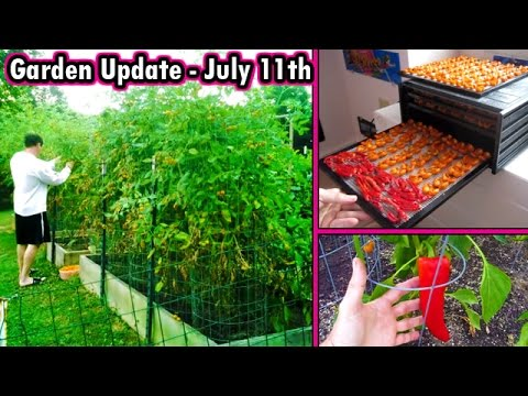 Garden Update July 3 Raised bed Square foot Dehydrate Vegetables
