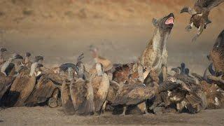 getlinkyoutube.com-Film trip in Kruger Park, Nikon D750  - Photos of Africa