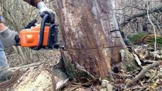 getlinkyoutube.com-Stihl ms170 cutting wood