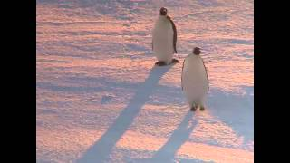 when you win the argument - penguin video