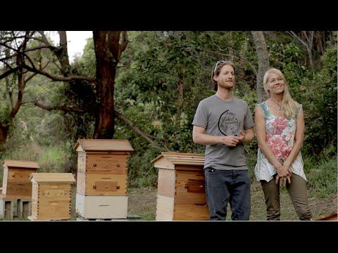 Beginner Beekeeping introduction