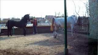 getlinkyoutube.com-čolunovi konji.wmv