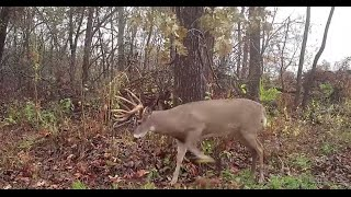 Best Tips for Creating Better Whitetail Habitat