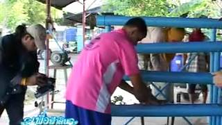 getlinkyoutube.com-ปลูกผักคอนโดด้วยท่อPVC