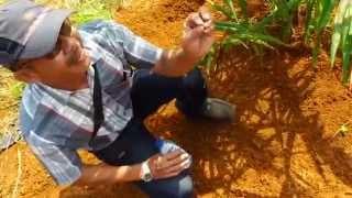 getlinkyoutube.com-Cara Membuat Petakan Pohon Kelapa Sawit