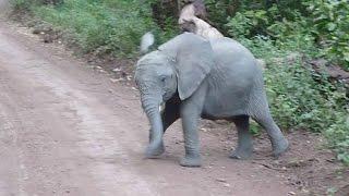 Sweet Animal Dance Moves